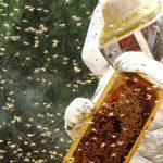 תמכו בתוצרת הארץ בקנייה ישירה של דבש מדבוראי ישראל
